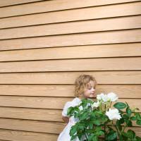 Влияние термообработки на древесину